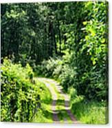 Spring Hikes Canvas Print