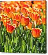 Spring In Beantown Canvas Print