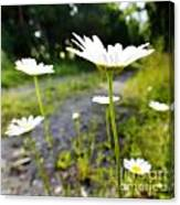 Spring In Campbell Hall Canvas Print