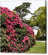 Spring In Muckross Garden - Ireland Canvas Print