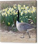 Spring In My Strut Canvas Print