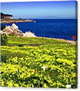 Spring In Pacific Grove Ca Canvas Print