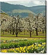 Spring In The Hood River Valley Canvas Print