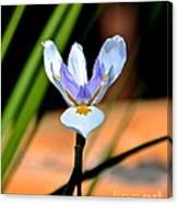 Spring Iris Canvas Print