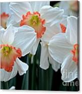 Spring Jonquils Canvas Print