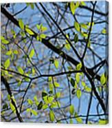 Spring Leaves 2 Canvas Print