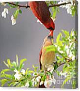 Cardinal Spring Love Canvas Print
