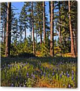 Spring Lupines In The Forest Canvas Print