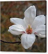 Spring Magnolia Canvas Print
