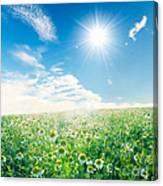 Spring Meadow Under Sunny Blue Sky Canvas Print