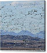 Spring Migration #1 Canvas Print