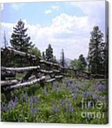 Spring Mountain Lupines 2 Canvas Print