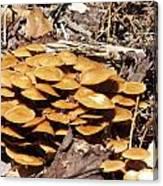 Spring Mushrooms 2 Canvas Print