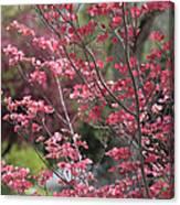 Spring Neighborhood Canvas Print