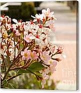 Spring On The Street Canvas Print