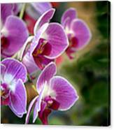 Spring Orchids I Canvas Print