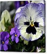 Spring Pansy Flower Canvas Print
