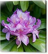 Spring Perfect Rhodie Canvas Print