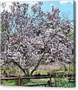 Spring Picnic Canvas Print