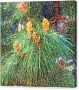 Spring Pine Canvas Print