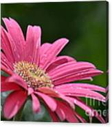 Spring Pink 2014 Canvas Print