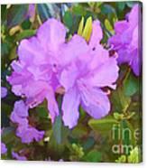 Spring Pink Azalea Canvas Print