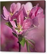Spring Pink... Canvas Print