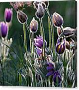 Spring Remembered Canvas Print