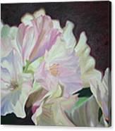 Spring Rhodys Canvas Print