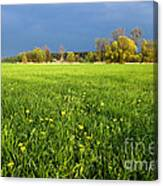 Spring Scenery Canvas Print