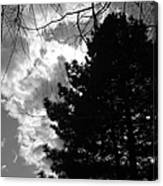 Spring Sky And Pine 1 Bw Canvas Print