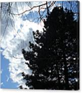 Spring Sky And Pine 1 Canvas Print