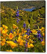 Spring Southwest Style  Canvas Print