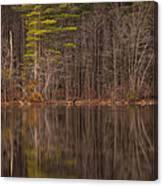 Spring Stillness Canvas Print