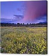 Spring Storm At Andalucia Canvas Print