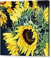 Spring Sunflowers Canvas Print
