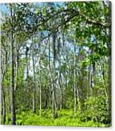 Spring Swamp Canvas Print