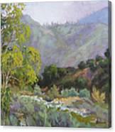 Spring Sycamore Canvas Print