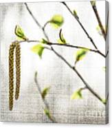 Spring Tree Branch Canvas Print