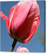 Spring Tulip Blues Canvas Print