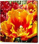 Spring Tulip Flowers Art Prints Yellow Red Tulip Canvas Print