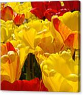 Spring Tulips Art Prints Yellow Red Tulip Flowers Canvas Print