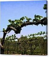 Spring Vineyard Canvas Print