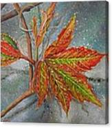 Spring Virginia Creeper Canvas Print