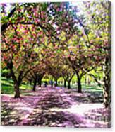 Spring Walkway Lined By Blooming Cherry Trees Canvas Print