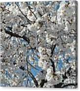 Spring White Canvas Print