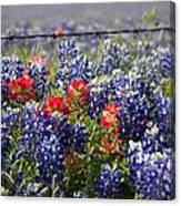 Spring Wildflowers Canvas Print