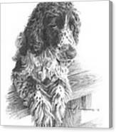 Springer Spaniel Dog Pencil Portrait Canvas Print