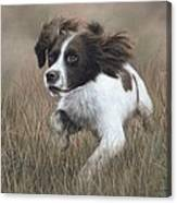 Springer Spaniel Painting Canvas Print