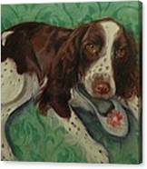Springer Spaniel With Shoe Canvas Print